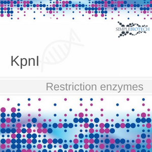 KpnI restriction enzyme