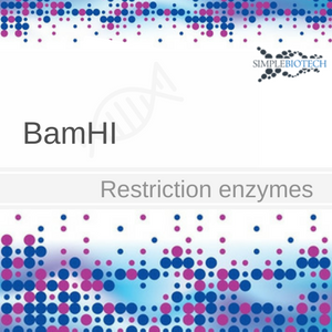 BamHI restriction endonuclease