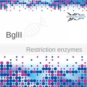BglII restriction endonuclease