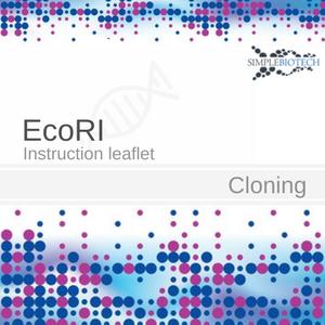 EcoRI Restriktionsenzym